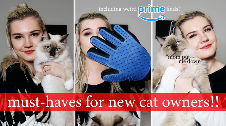 essentials for new cat parents | random amazon buys and more!